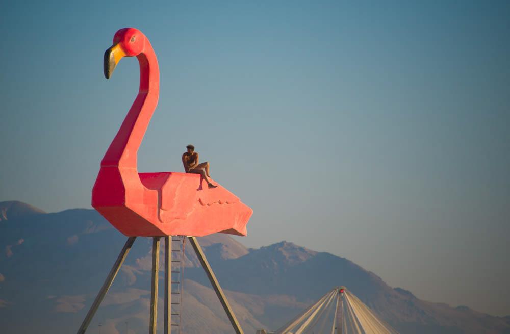 bm-flamingo