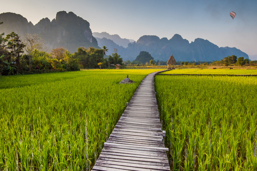 Laos rice field walkway